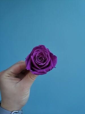 Роза фиолетовая 4см стабилизированная