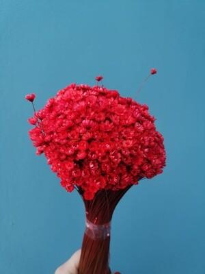 Гликсия красная большой пучок