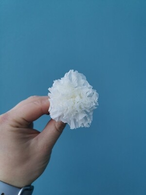 Гвоздика белая стабилизированная