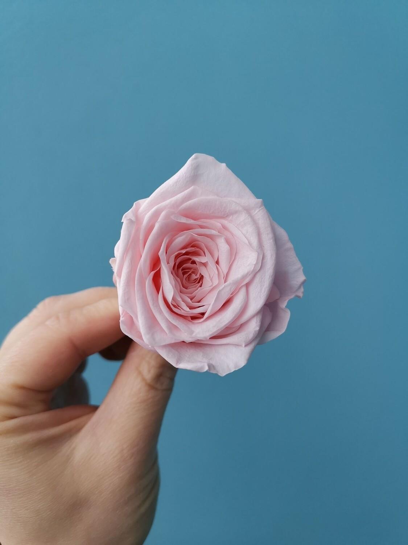 Роза розовая светлая 4см стабилизированная