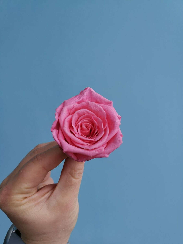 Роза розовая насыщенная 4-5см стабилизированная