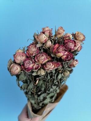 Роза кустовая микс сухоцвет