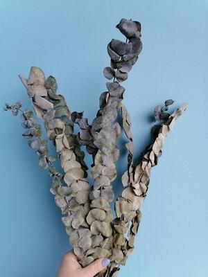 Эвкалипт сухой синерея