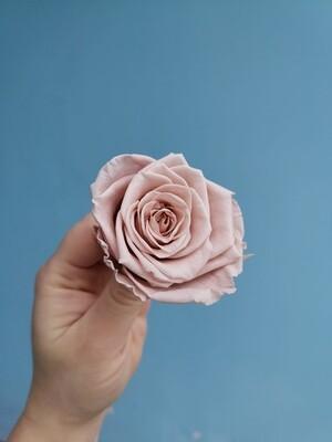 Роза мокко 5см стабилизированная