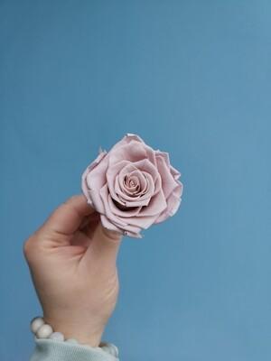 Роза мокко 4см стабилизированная