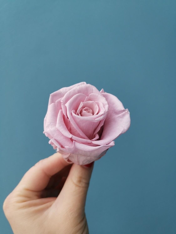 Роза розовая бледная 5см стабилизированная