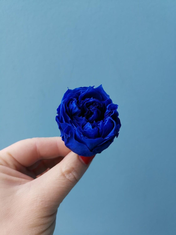 Роза синяя пионовидная 3,5см стабилизированная