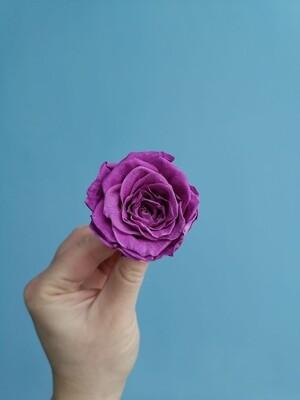 Роза фиолетовая 5см стабилизированная