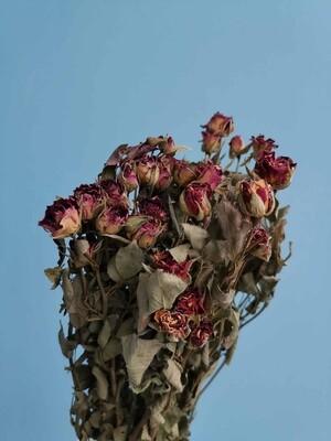 Роза кустовая бордовая сухоцвет