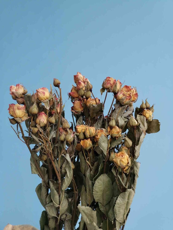 Роза кустовая желтая с розовым сухоцвет