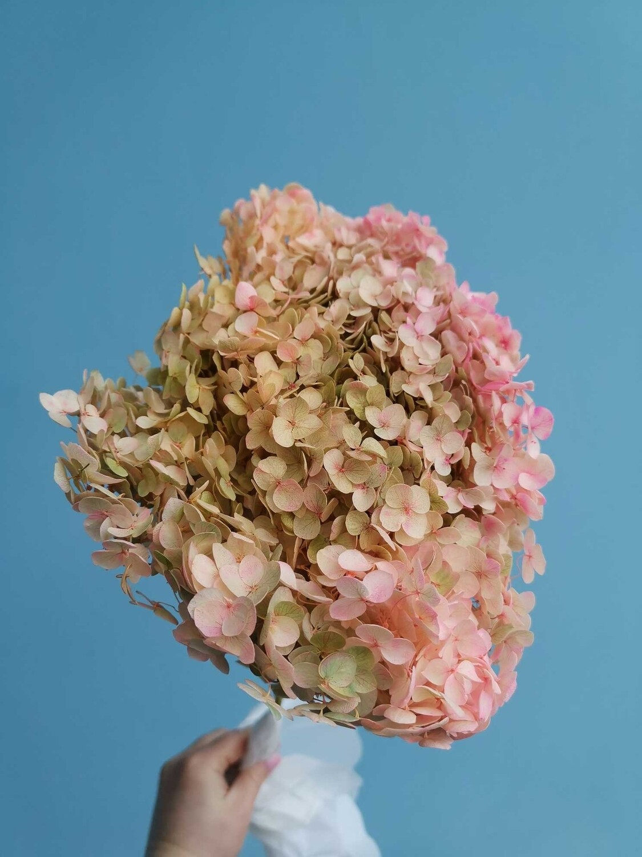 Гортензия розовая с зеленым стабилизированная