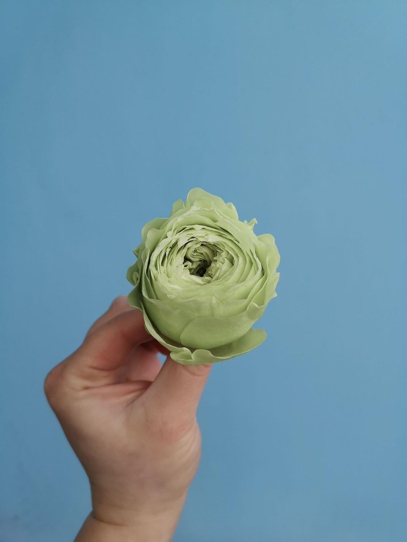 Роза салатовая 5см пионовидная стабилизированная