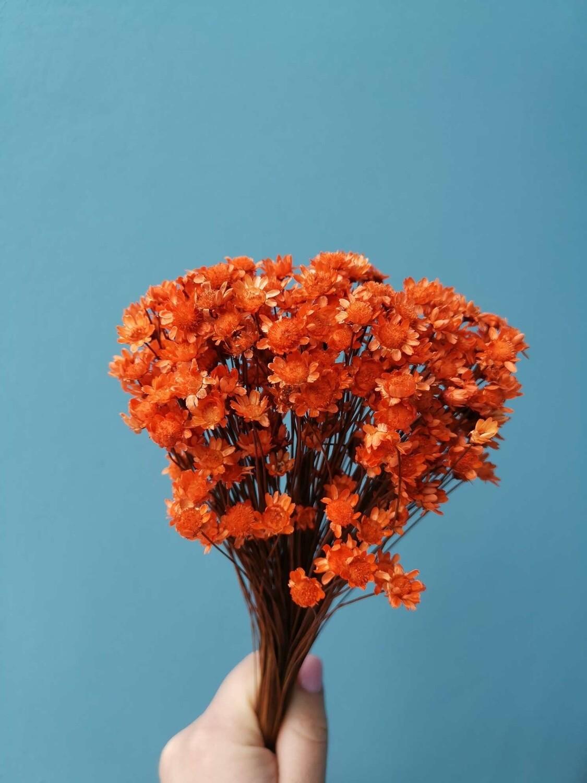 Гликсия оранжевая маленький пучок