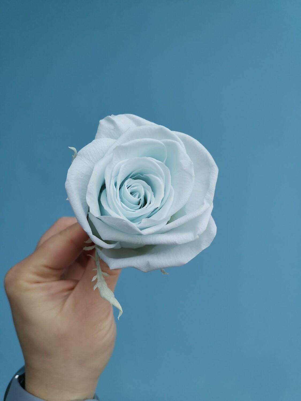 Роза голубая нежная baby blue 6см стабилизированная Эквадор