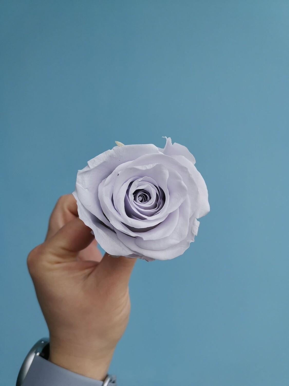Роза сиреневая cool lavender 6см стабилизированная Эквадор