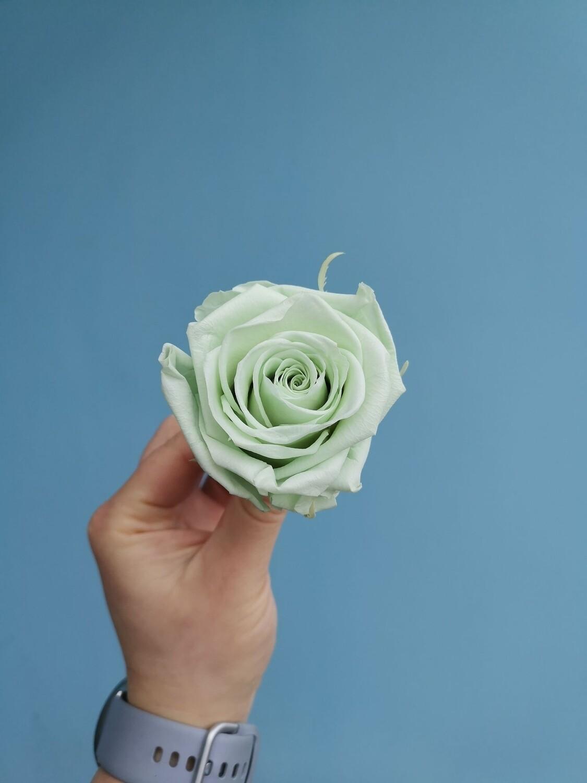 Stabilized rose bud 6cm mint