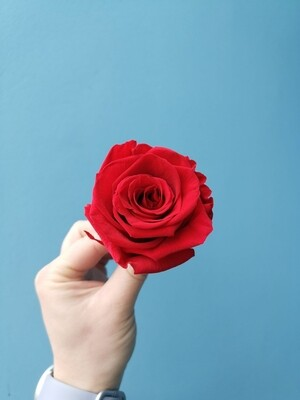 Stabilized rose bud 6cm red