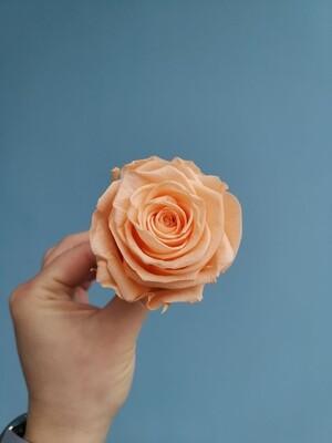 Роза персиковая perfect peach 6см стабилизированная Эквадор