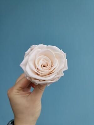 Роза нюд sand 6см стабилизированная Эквадор