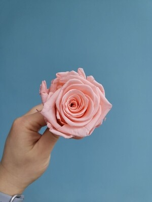 Роза розовая Coral Pink 6см стабилизированная Эквадор
