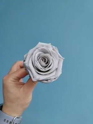 Роза серая gray knight 6см стабилизированная Эквадор