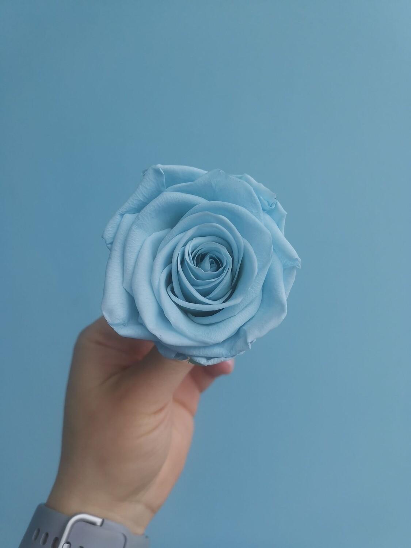 Роза голубая blue lagune 6см стабилизированная Эквадор