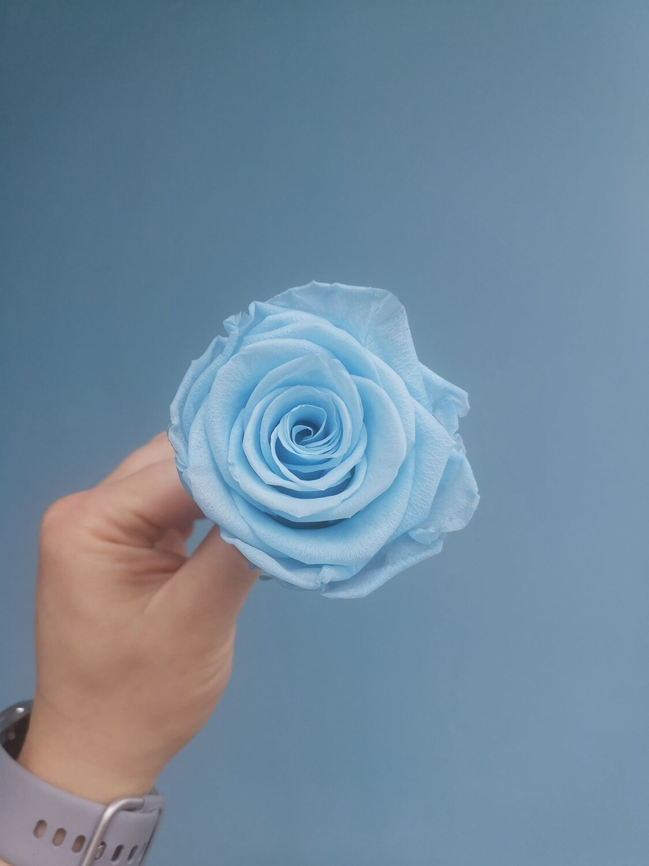 Stabilized rose bud 6cm sky blue