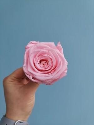 Роза розовая sweet pink 6см стабилизированная Эквадор
