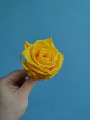 Роза жёлтая Sunshine 6см стабилизированная Эквадор