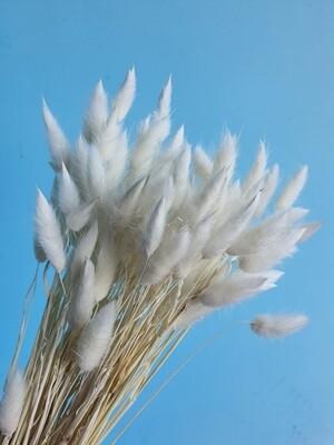 Лагурус белый Краснодар