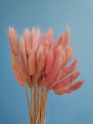 Лагурус розовые румяна