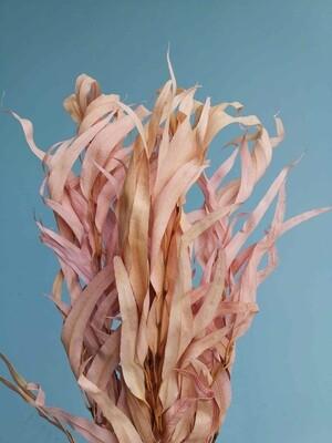 Эвкалипт розово-персиковый Николя стабилизированный