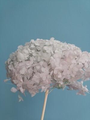 Гортензия мятная с розовым оттенком стабилизированная