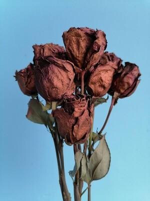 Роза сухоцвет бронзовая