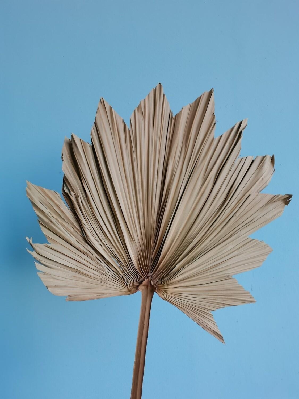 Palm leaf natural dried