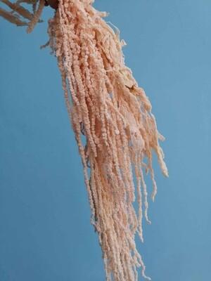 Амарант персиковый стабилизированный