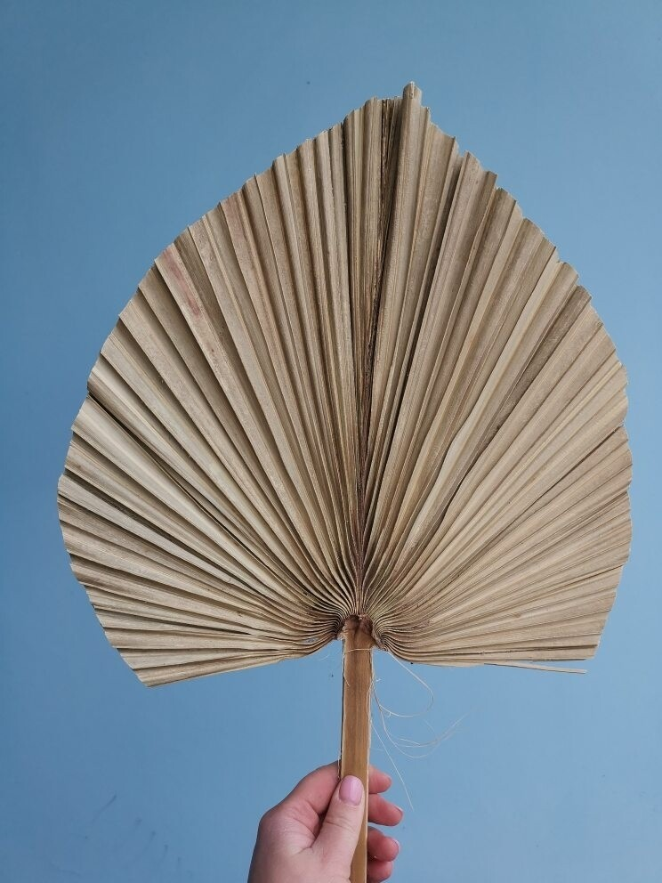 Лист пальмы копье большой натуральный