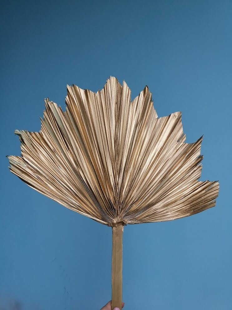 Palm leaf natural dried gold