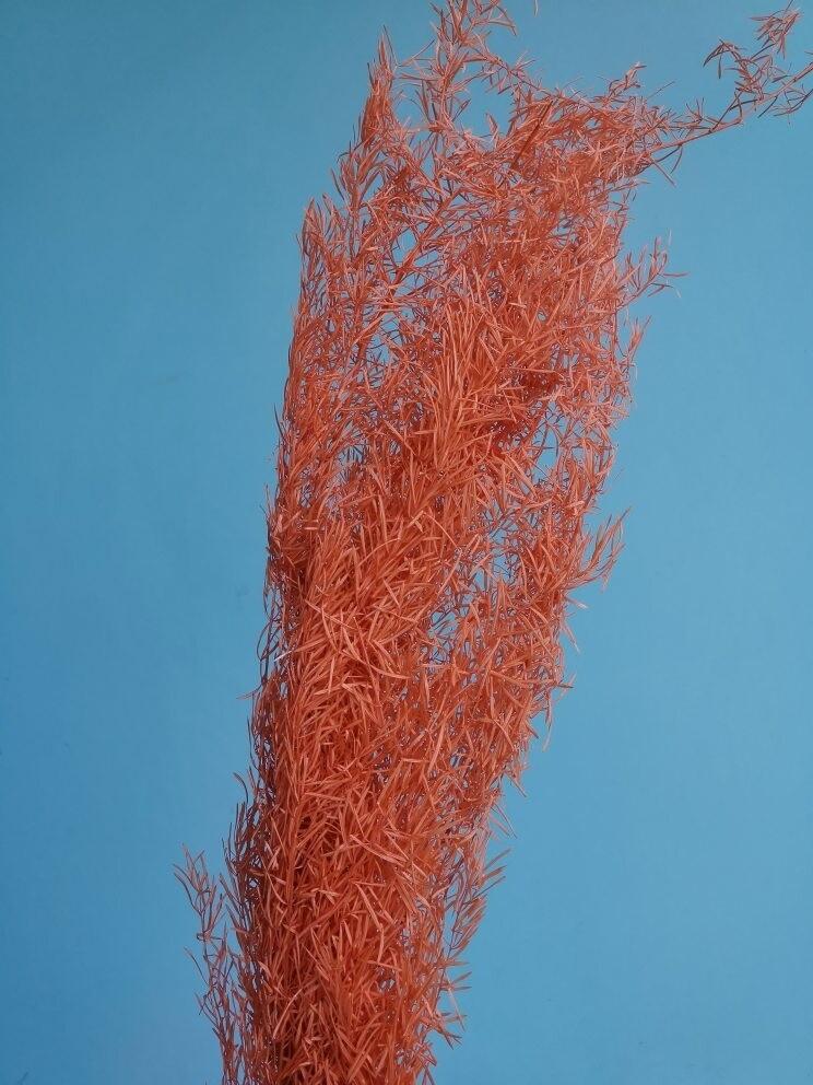 Аспарагус оранжевый шпренгера стабилизированный