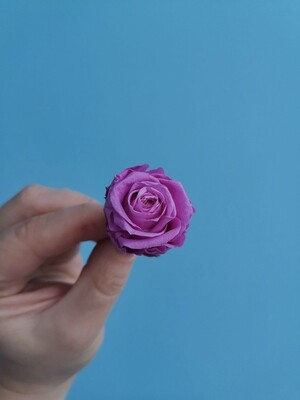 Роза лиловая 2-3см стабилизированная