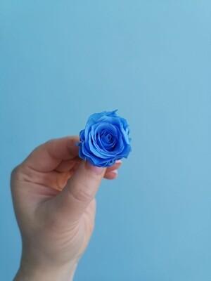 Роза голубая 2-3см стабилизированная