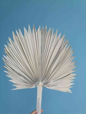 Лист пальмы слоновая кость веером натуральный