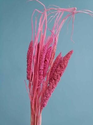 Сетария розовая дымка