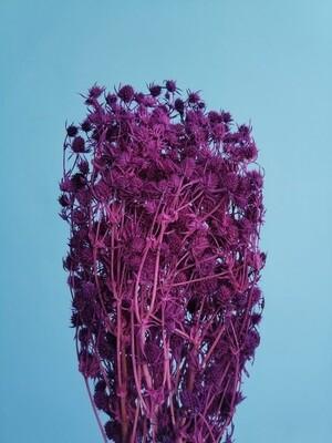 Eryngium violet stabilized
