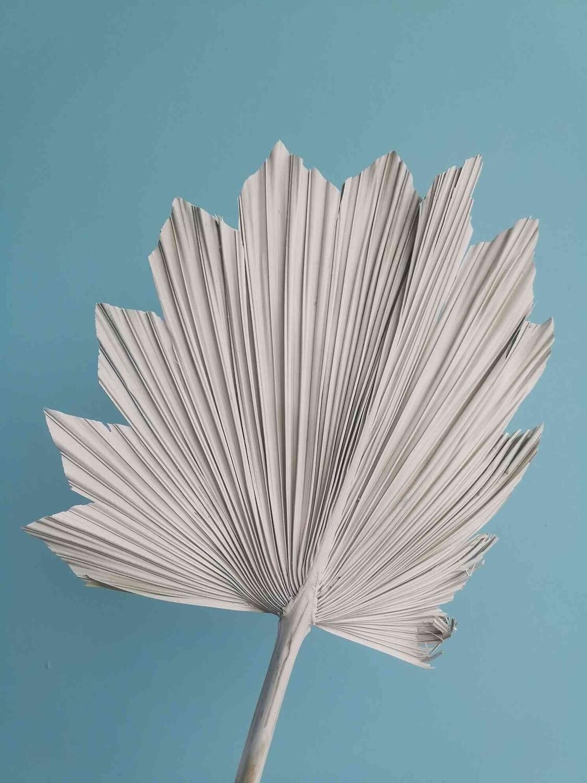 Лист пальмы веером магнолия