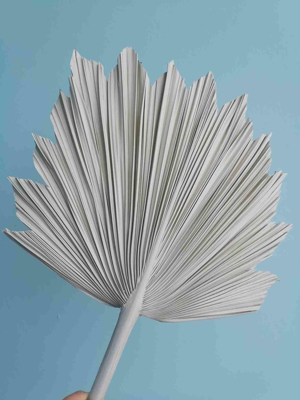 Лист пальмы веером светло серый