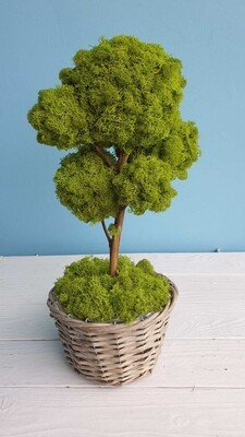 ?Tree for Interior 50cm