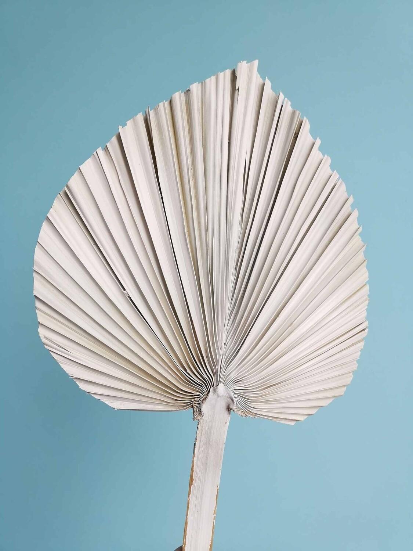 Лист пальмы копье магнолия большой