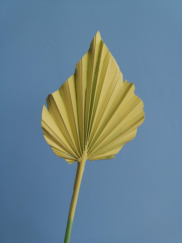 Лист пальмы копье малое жёлтый