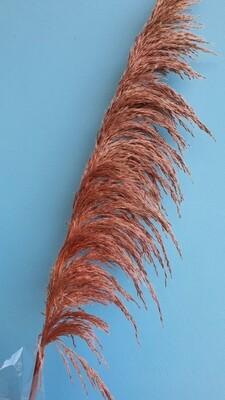 Cortaderia (pampas grass) pink dried